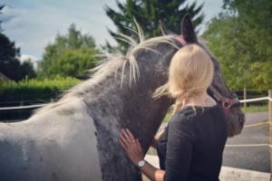 Cassie le cheval